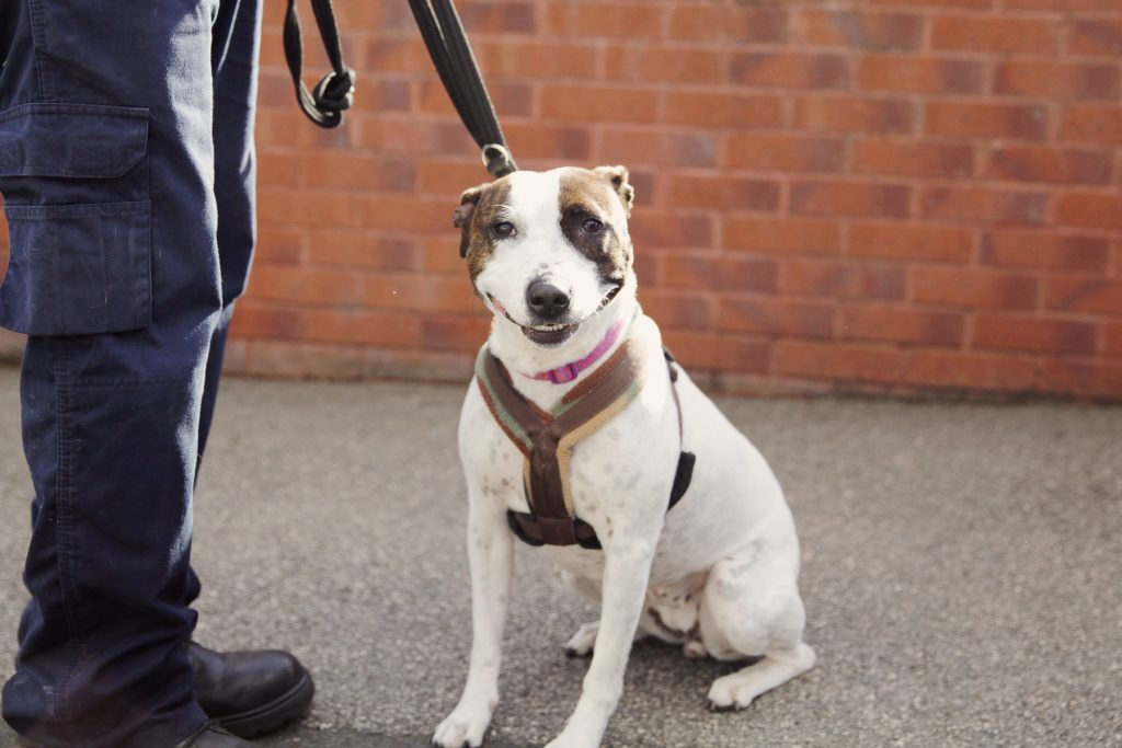 RSPCA Sheffield 10