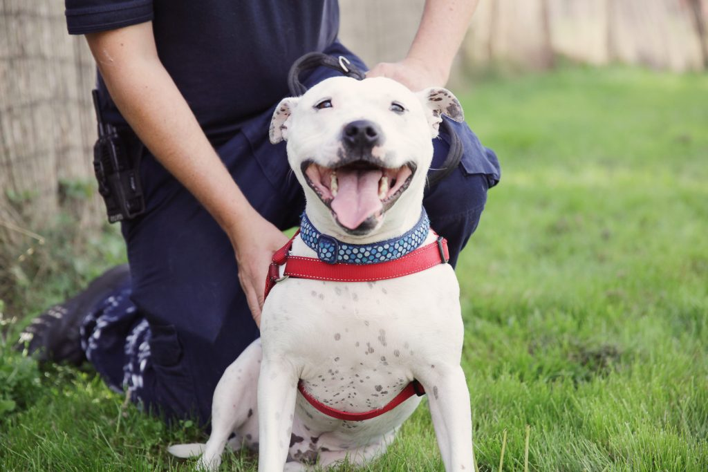 RSPCA Sheffield 3