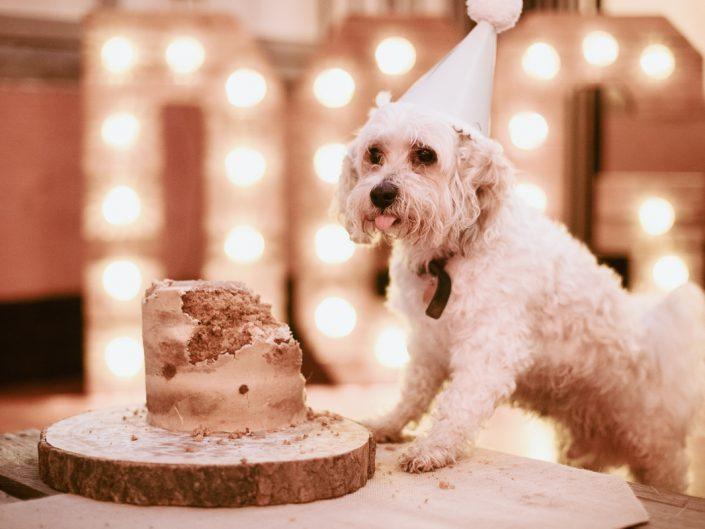 Chester's Birthday