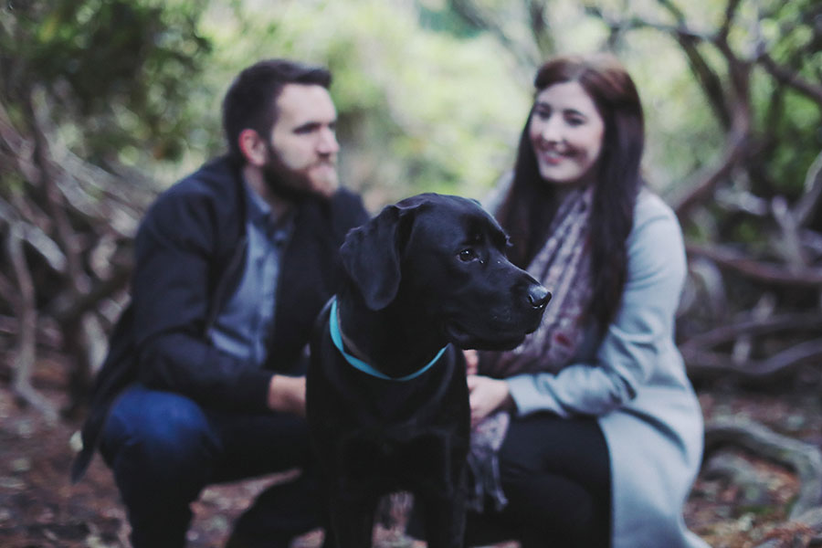 Peak District engagement shoot photoshoot | Longshaw Estate photoshoot | National Trust | Couple pre-wedding photoshoot Sheffield Yorkshire Derbyshire | Woodland engagement shoot location | Engagement couple photoshoot with pet dog