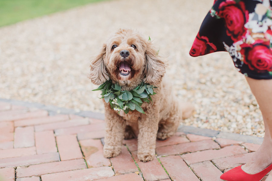Dogs at Weddings 11