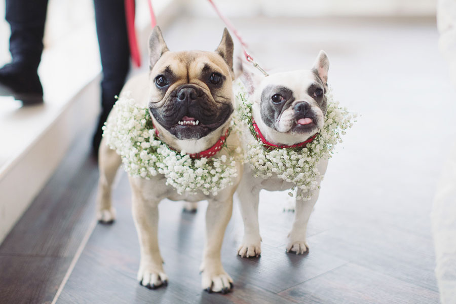 Dogs at Weddings 14