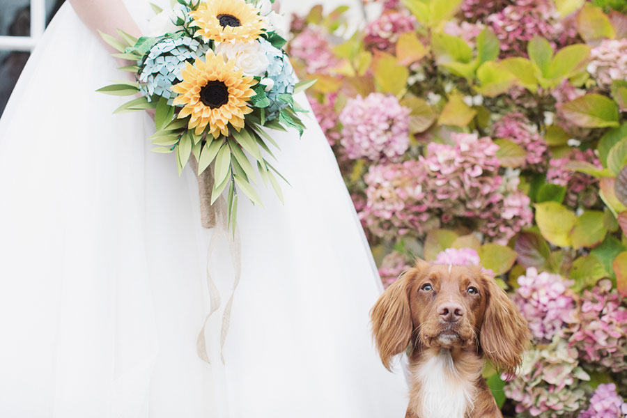 Dogs at Weddings 16