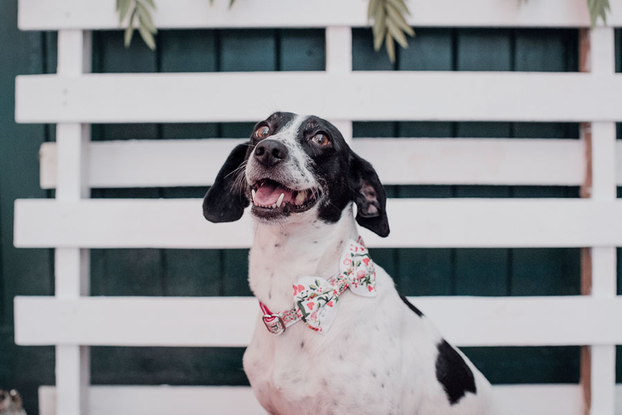 Dogs at Weddings 17