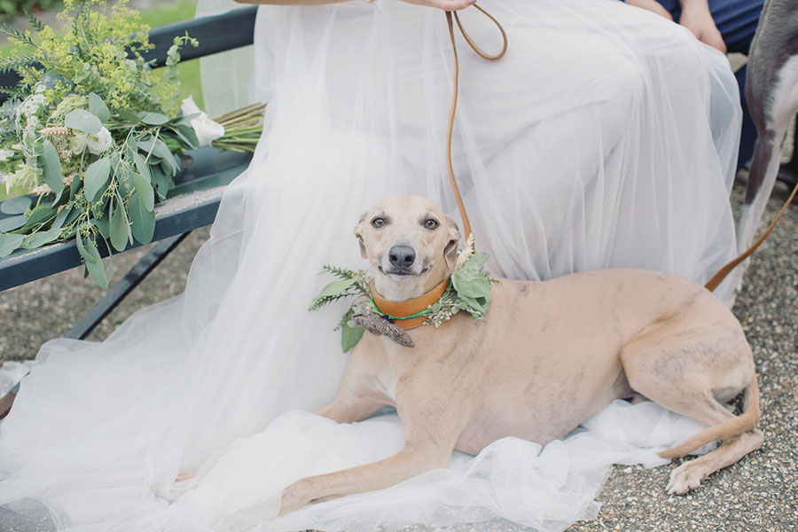 Dogs at Weddings 19