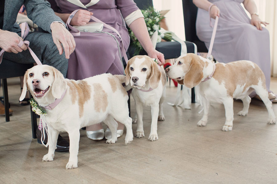 Dogs at Weddings 21