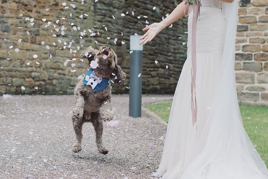 Dogs at Weddings 25
