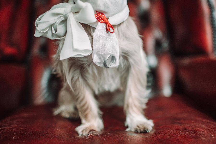 Dogs at Weddings 28