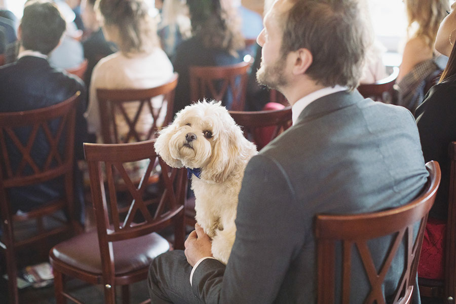 Dogs at Weddings 3