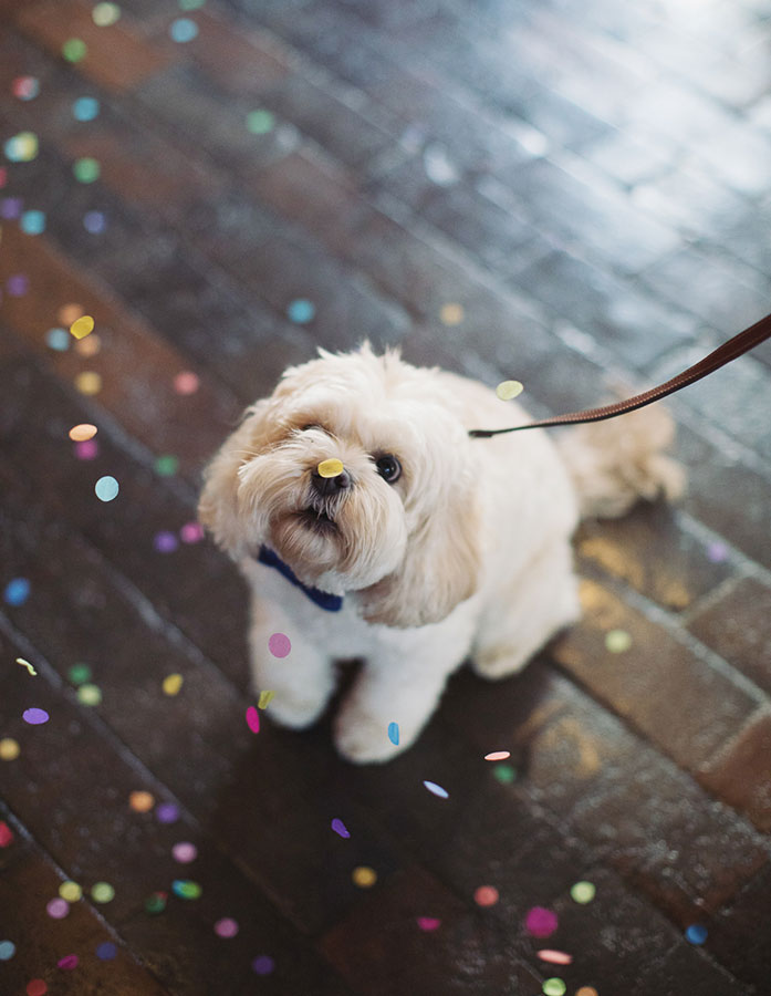 Dogs at Weddings 4