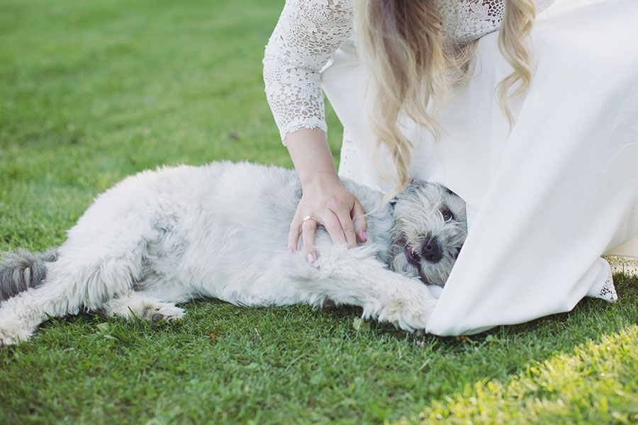 Dogs at Weddings 7