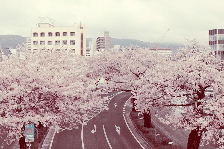 Fun Engagement Shoot Ideas | Cherry Blossom